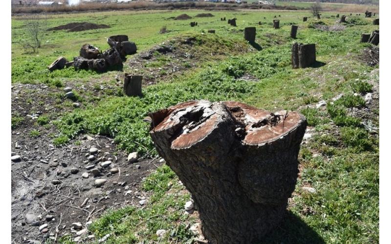 Erməni vandalları Azərbaycanın ekologiyasına ciddi ziyan vurublar