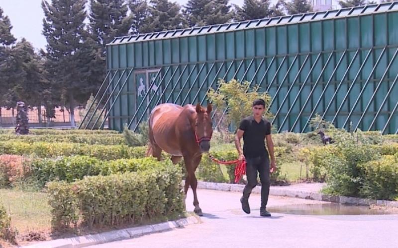 Qarabağ atları